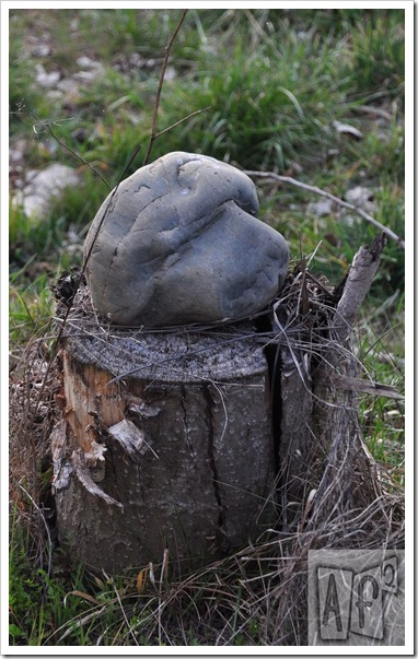 Piedra canina -af2