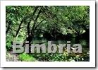 bimbria -af2