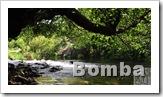 la bomba pozo - af2