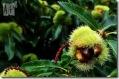 frutos del otoño toralnese