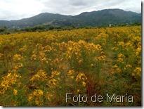 hipérico foto María  (2)